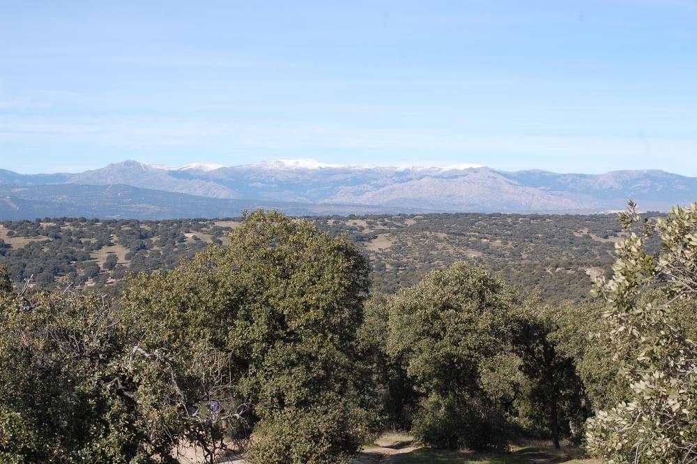 Blick von El Monte de El Pardo zur Sierra de Guadarrama