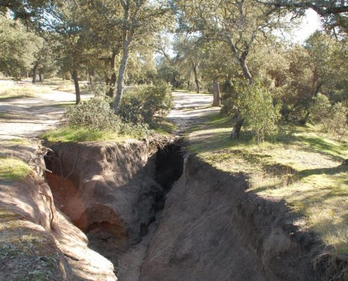 Wasser und Korrosion reißen Tiefe Gräben in El Monte de El Pardo