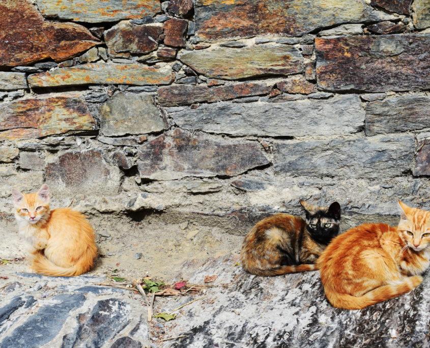 In Patones gibt es viele Katzen