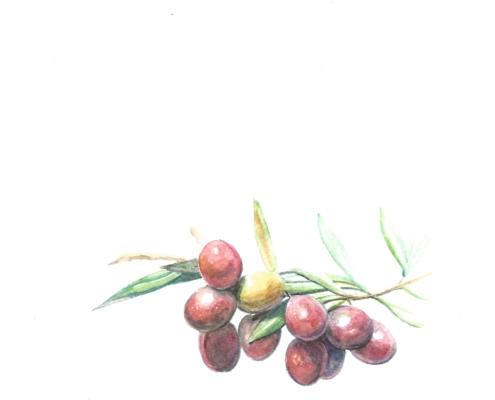 Arbequina pintona