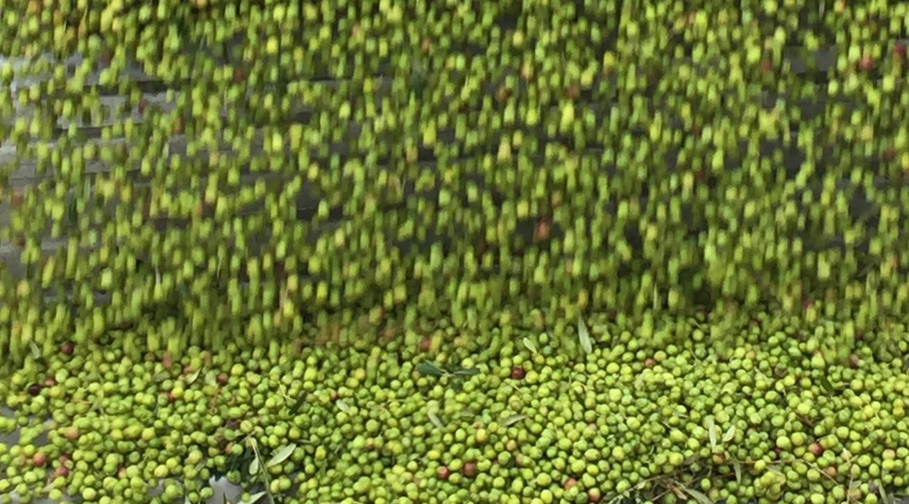 Abladen der Oliven