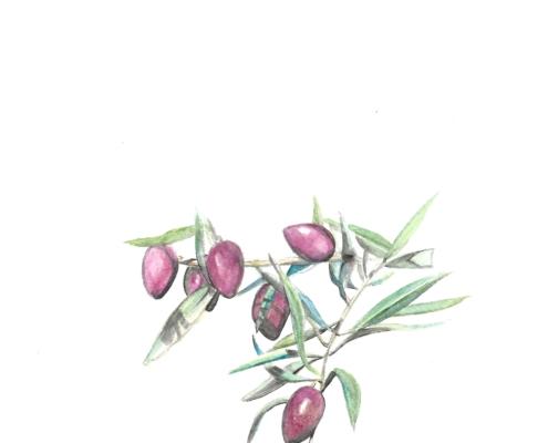 Cornicabra pintona
