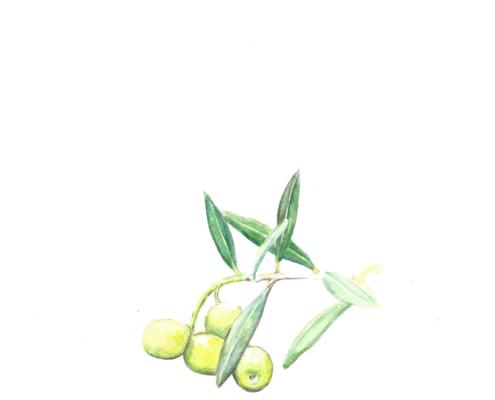 Grüne Manzanilla