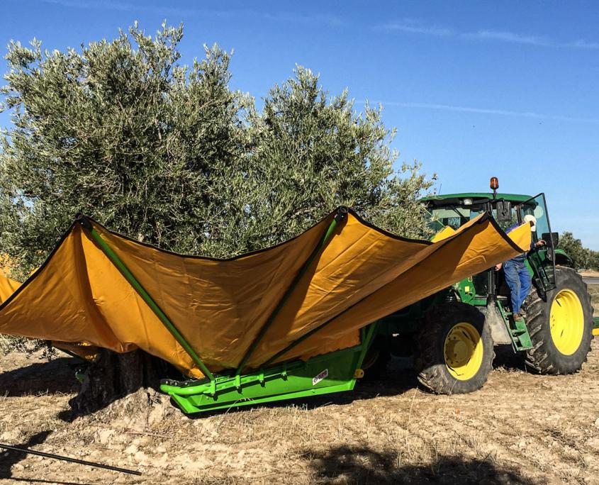 Die Olivenernte
