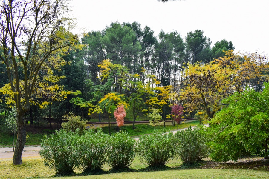 Der Park Dehesa de la Villa im Herbstkleid