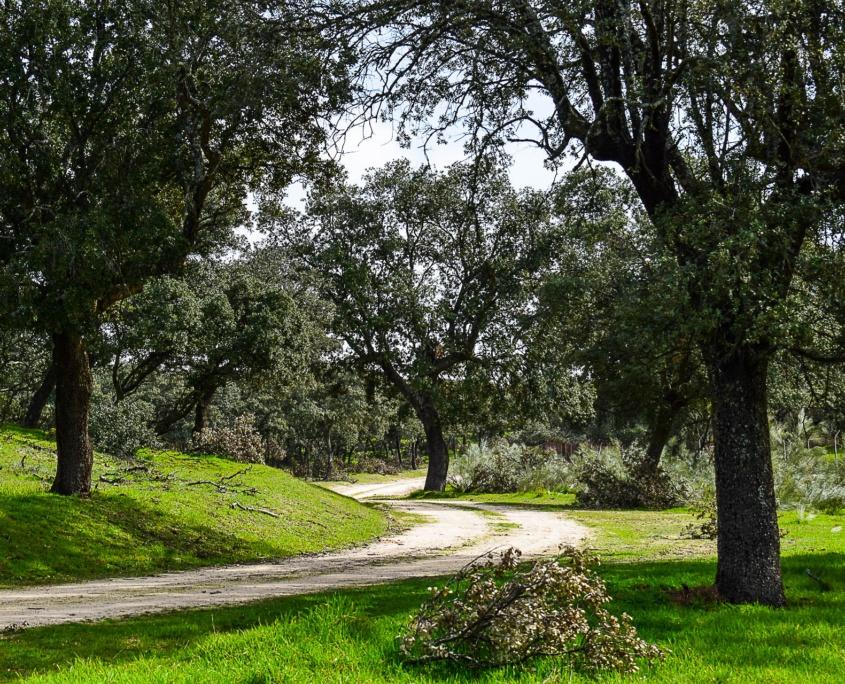 Weg im Bioreservat El Pardo
